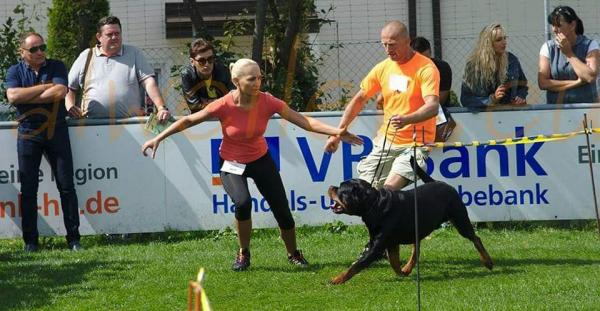 DIESEL  w akcji, walczymy o zwycięstwo! Klubowa Wystawa Rottweilerów ADRK w Niemczech!