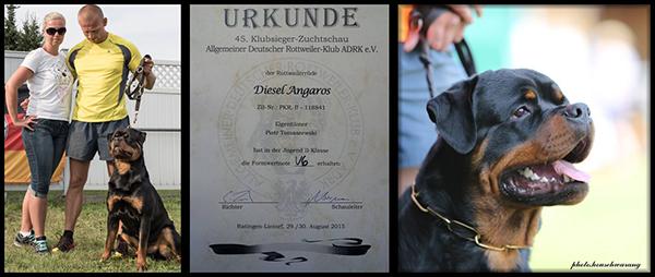 DIESEL Angaros (HERO von der Tonberger Höhe xNOVA Angaros d/o LACKY von der Sudpfalz / Rottweiler Angaros/Rottweilers Angaros kennel