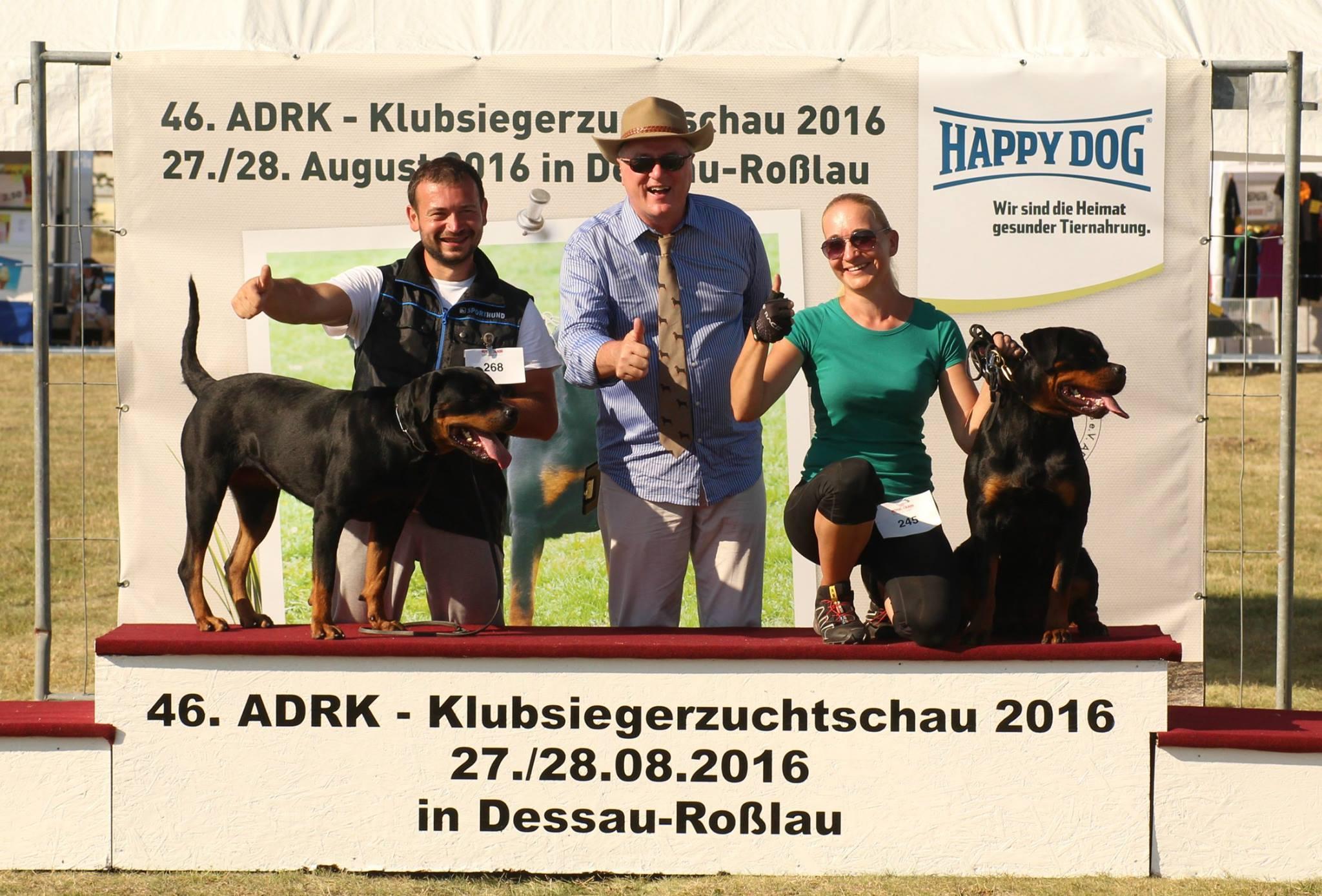 Na zdjęciu FARINA Angaros po wygraniu klasy pośredniej na Klubowej Wystawie Rottweilerów wNiemczech ADRK KSZ'16 (420 rottweilerów na wystawie)!!! sędziował: Anton Spindler (ADRK)