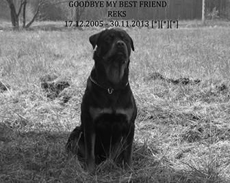 REKSIO | Rottweiler - Hodowla Rottweilerów Angaros - Rottweilers - Rottweilery