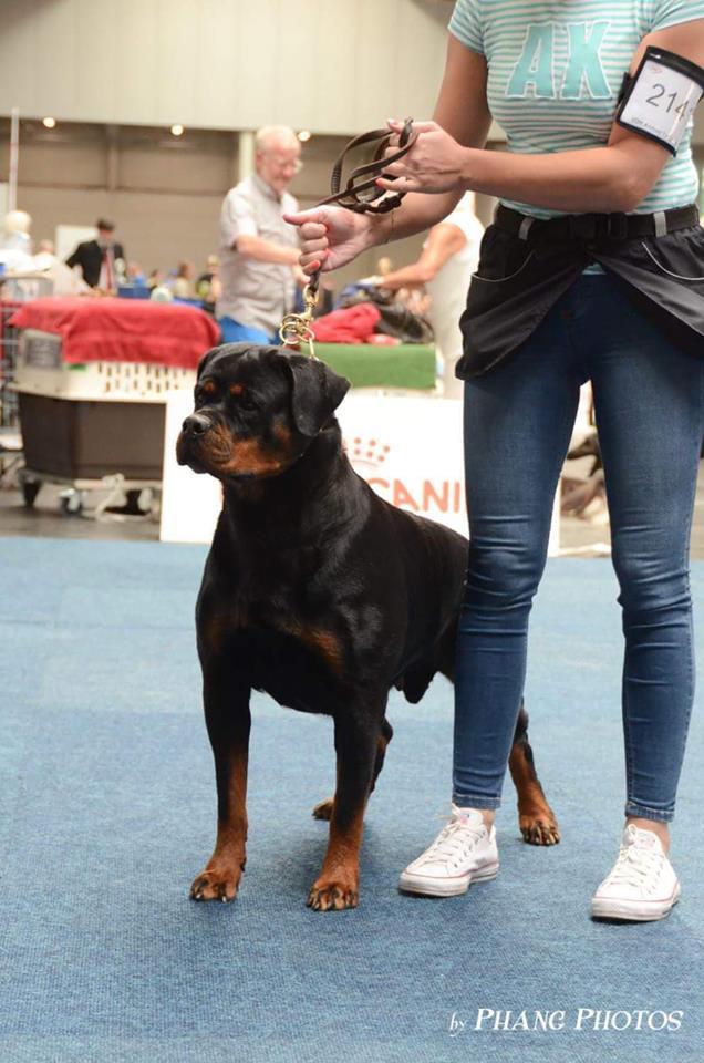 FARINA Angaros Międzynarodowym Championem Wystawowym C.I.E (Interchampion)!!! | Rottweiler - Hodowla Rottweilerów Angaros - Rottweilers - Rottweilery