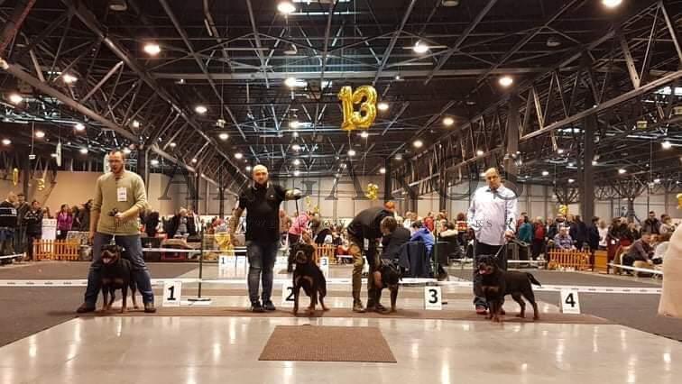 GINA Angaros ZWYCIĘŻCZYNIĄ klasy otwartej na Międzynarodowej Wystawie Psów Rasowych w Katowicach ! | Rottweiler - Hodowla Rottweilerów Angaros - Rottweilers - Rottweilery