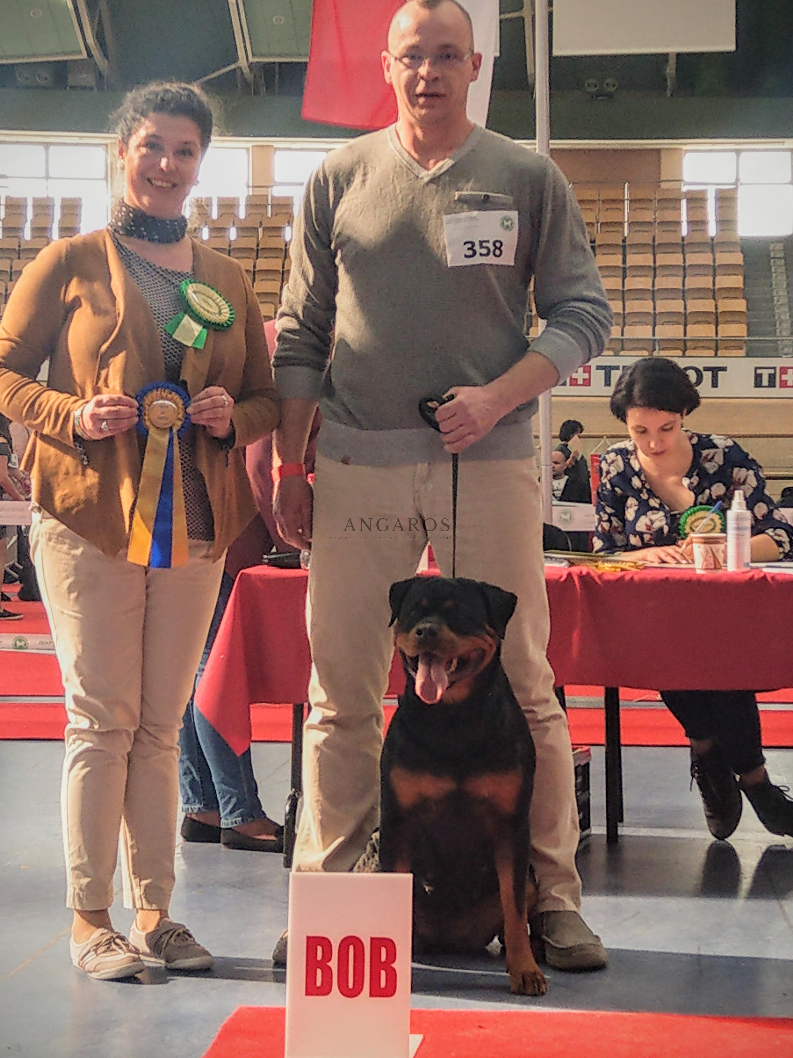 GINA Angaros Najlepszym Rottweilerem Krajowej Wystawy Psów Rasowych w Pruszkowie! | Rottweiler - Hodowla Rottweilerów Angaros - Rottweilers - Rottweilery