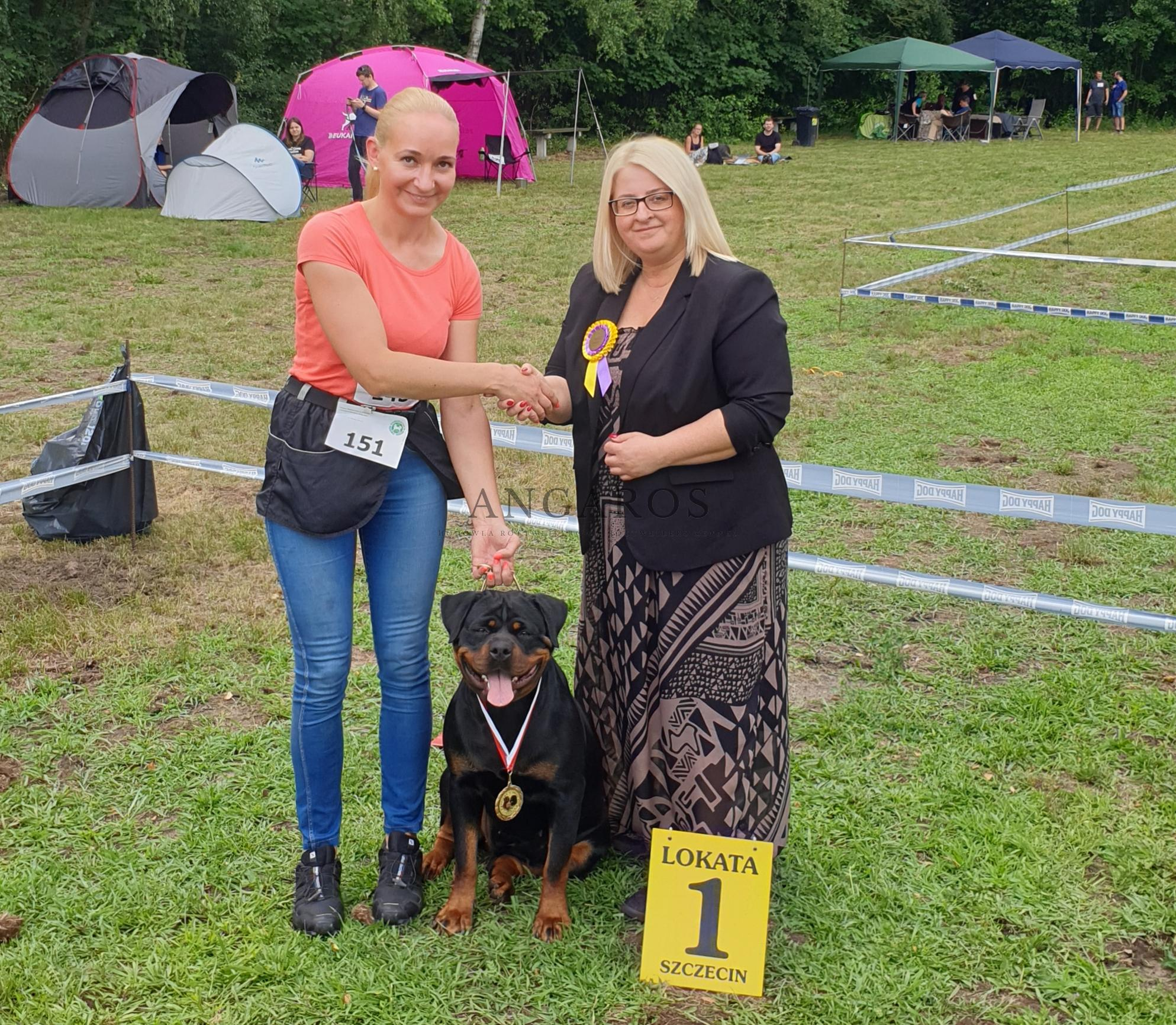 MERCEDES for ANGAROS Darel – Zwyciężczynią Młodzieży i Najlepszym Juniorem Krajowej Wystawy Psów Rasowych w Lubieszynie !!! | Rottweiler - Hodowla Rottweilerów Angaros - Rottweilers - Rottweilery