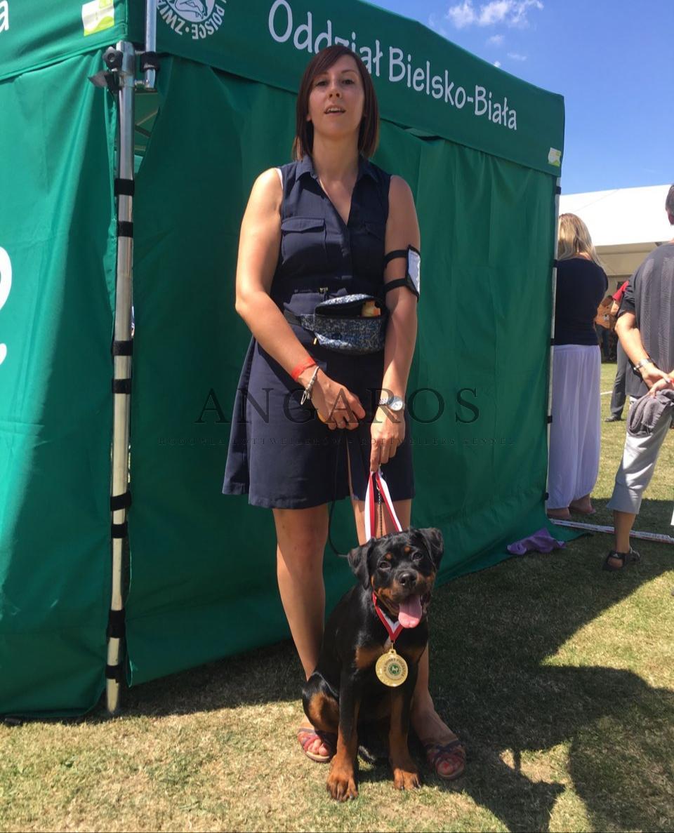 Świetny debiut wystawowy 4 miesięcznej MONA LISY Angaros na Międzynarodowej Wystawie Psów Rasowych w Wiśle! | Rottweiler - Hodowla Rottweilerów Angaros - Rottweilers - Rottweilery
