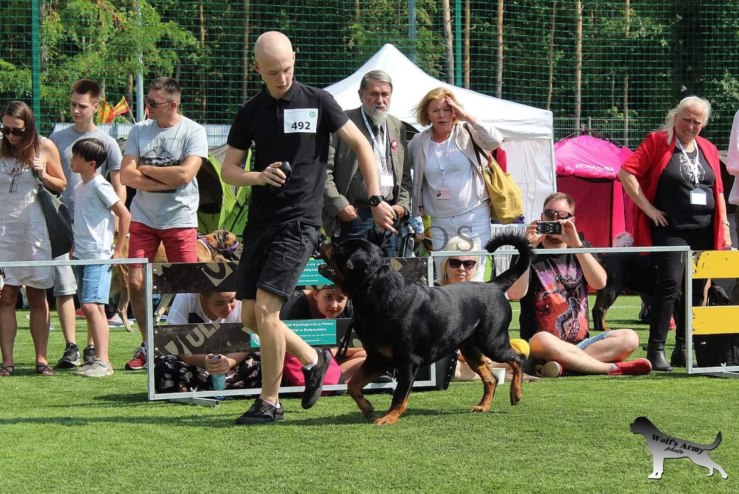 Krajowa Wystawa 2 grupy FCI (18.08.2019) – IMPERATOR Angaros Zwycięzcą Klasy Pośredniej | Rottweiler - Hodowla Rottweilerów Angaros - Rottweilers - Rottweilery