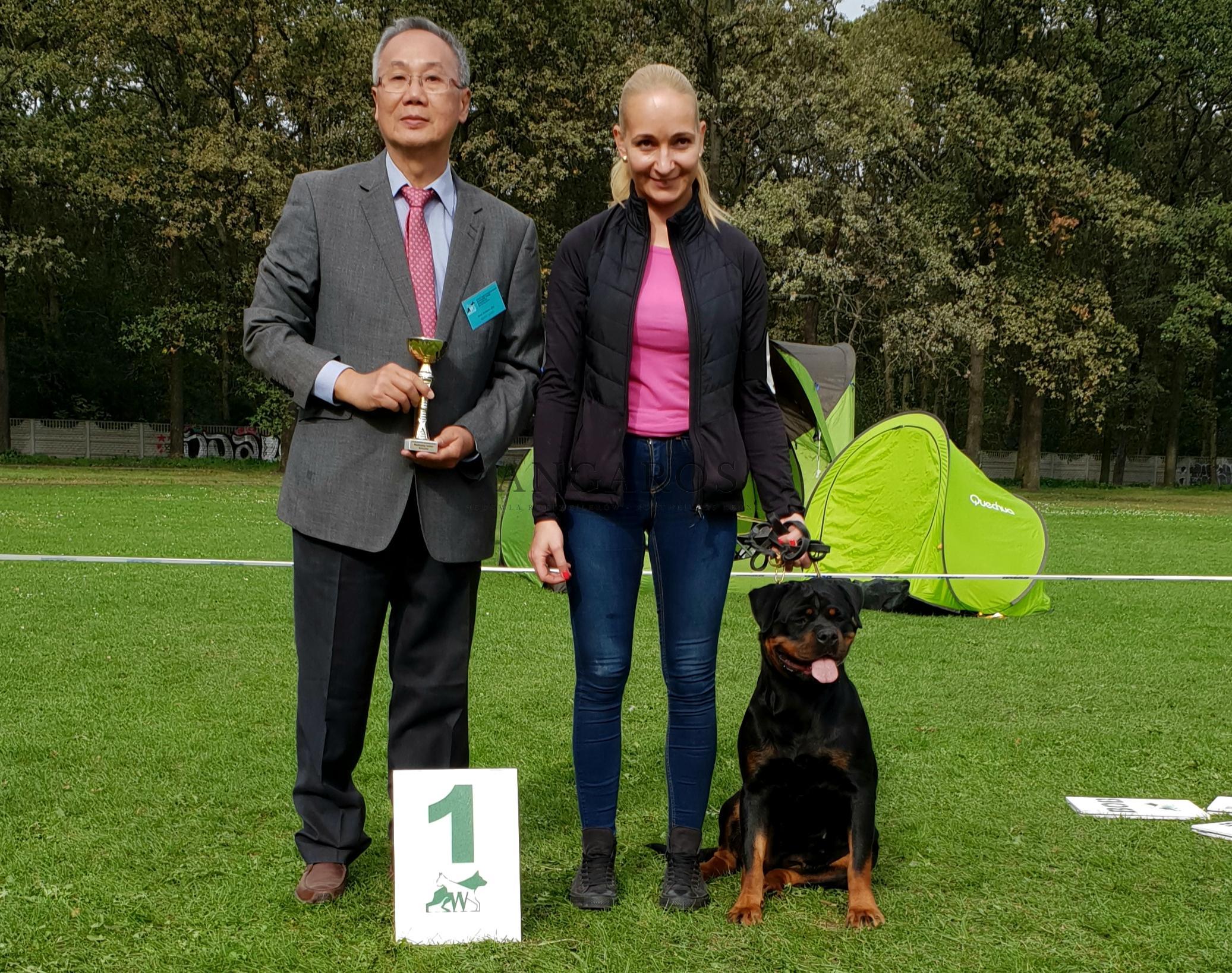 Mamy to! MERCEDES FOR ANGAROS Darel Młodzieżową Zwyciężczynią Polski 2019 ! A także Młodzieżowym Championem Polski !!! | Rottweiler - Hodowla Rottweilerów Angaros - Rottweilers - Rottweilery