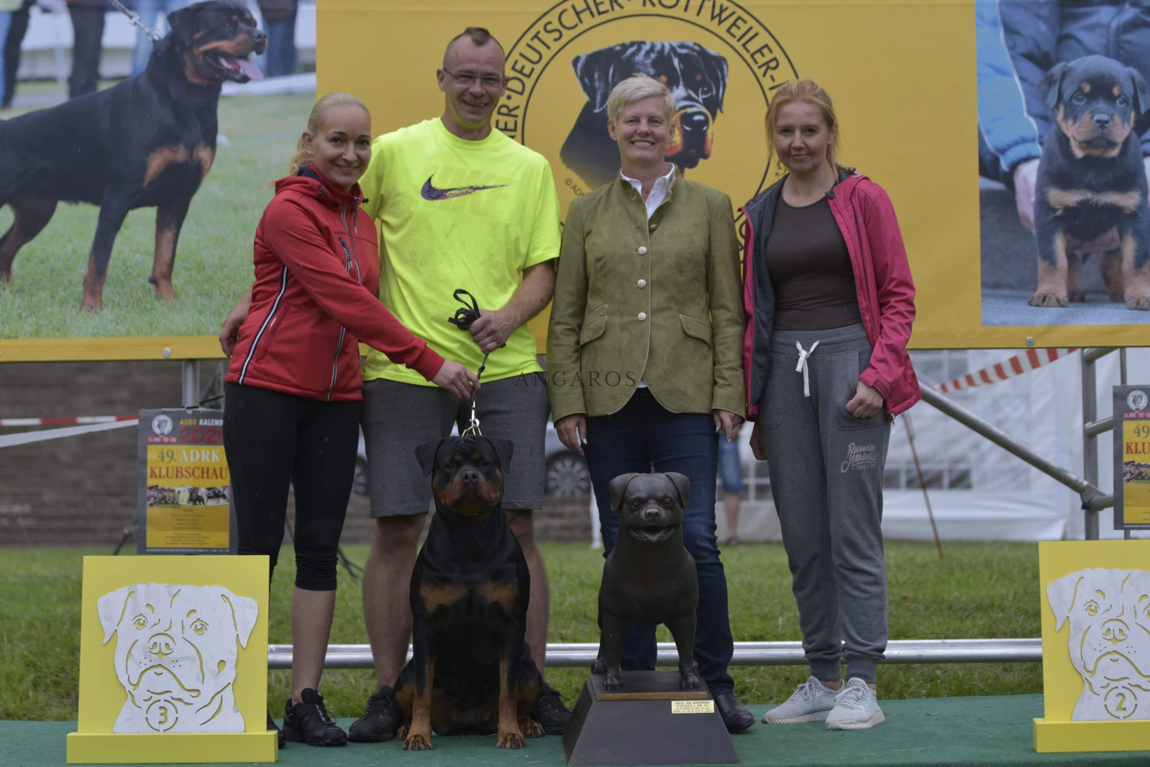 Rewelacyjny wynik GINY Angaros na Najważniejszej Wystawie Rottweilerów na Świecie ! Klubowa Wystawa Rottweilerów ADRK w Niemczech Buckenburg 2019 ! | Rottweiler - Hodowla Rottweilerów Angaros - Rottweilers - Rottweilery