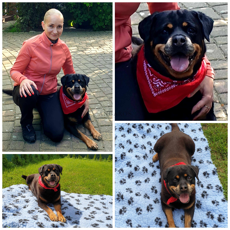 Nasza ukochana weteranka kończy dzisiaj 12 lat !!! | Rottweiler - Hodowla Rottweilerów Angaros - Rottweilers - Rottweilery