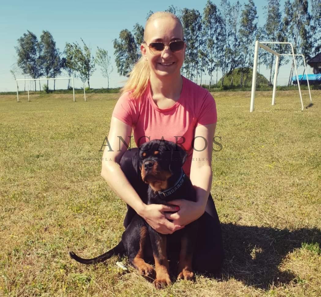 PORTOSS Angaros – ostatnie chwile razem, już niebawem PORTOSS będzie reprezentował naszą hodowlę w Norwegii | Rottweiler - Hodowla Rottweilerów Angaros - Rottweilers - Rottweilery