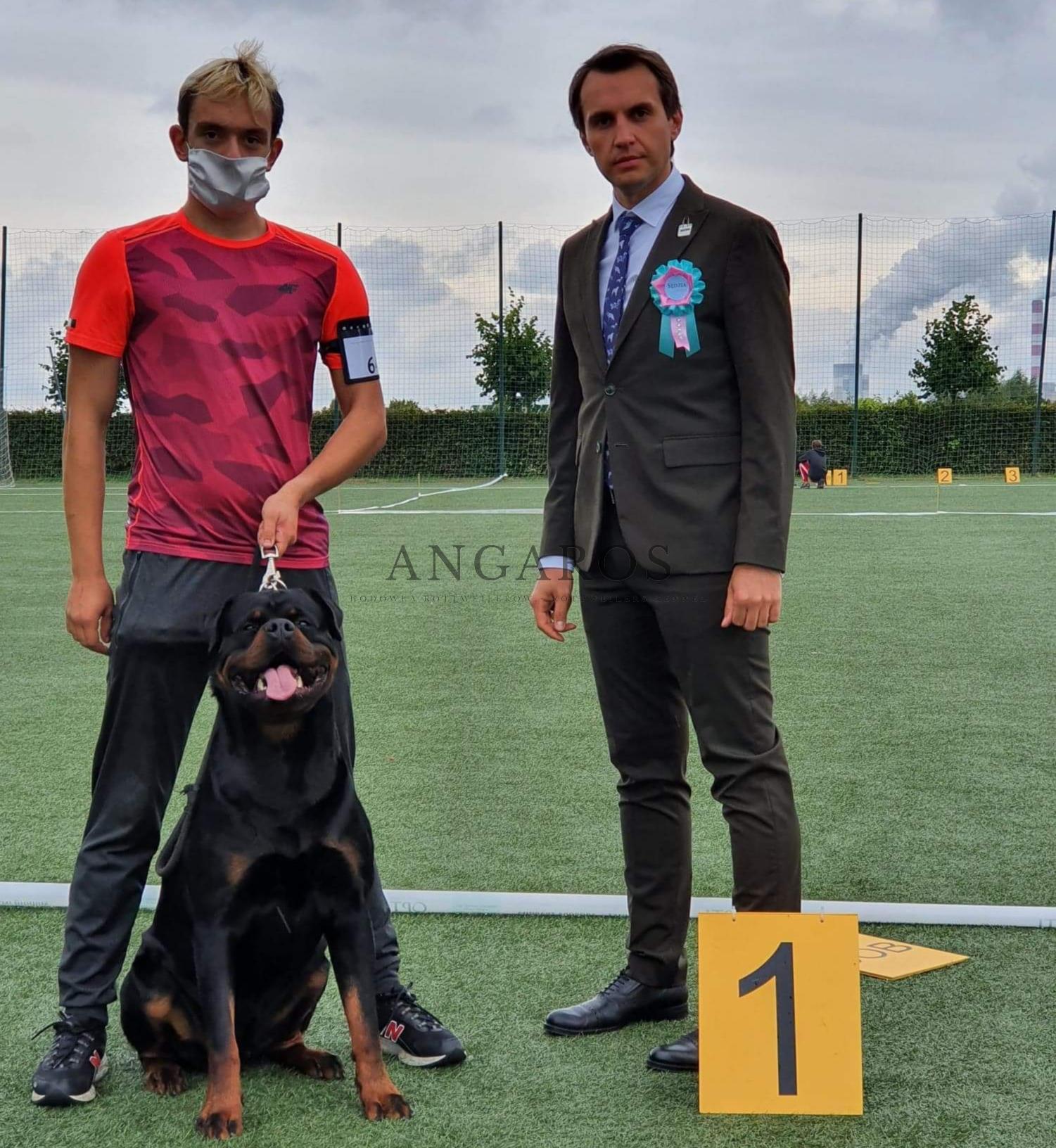 MAX Angaros Zwycięzcą klasy pośredniej Krajowej Wystawy Psów Rasowych w Kleszczowie 29.08.2020 r. | Rottweiler - Hodowla Rottweilerów Angaros - Rottweilers - Rottweilery