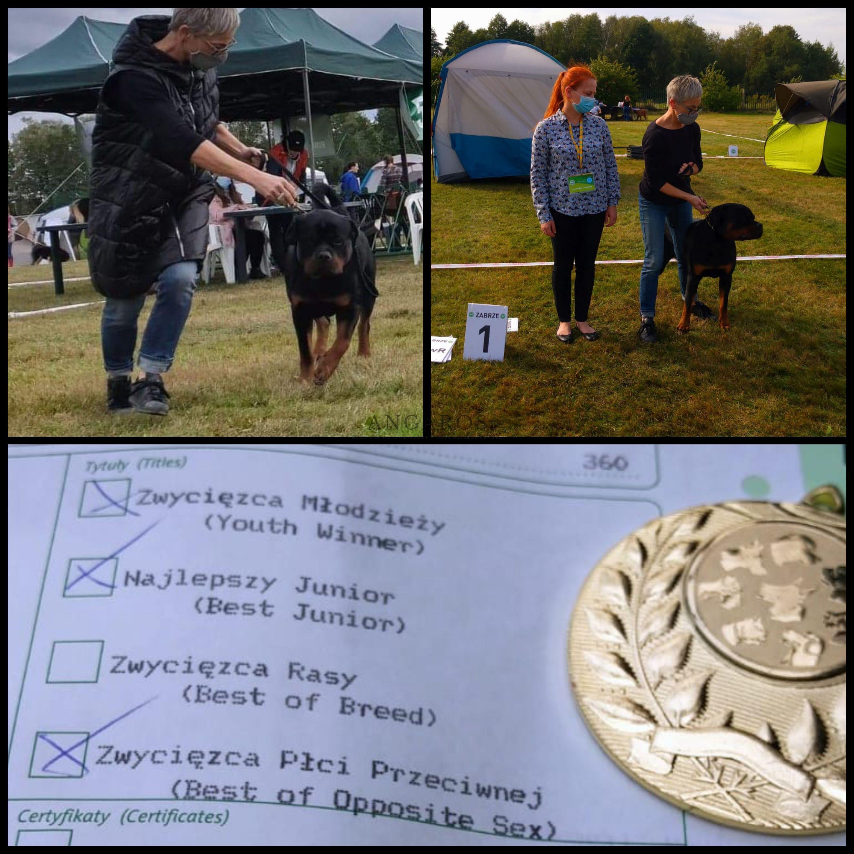 Bardzo udany weekend dla rottweilerów ANGAROS! | Rottweiler - Hodowla Rottweilerów Angaros - Rottweilers - Rottweilery