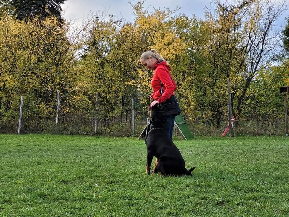 PRADA Angaros – przygotowania do egzaminu BH | Rottweiler - Hodowla Rottweilerów Angaros - Rottweilers - Rottweilery