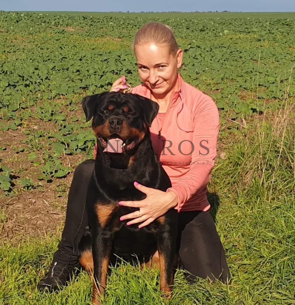 KASJOPEA Angaros | Rottweiler - Hodowla Rottweilerów Angaros - Rottweilers - Rottweilery