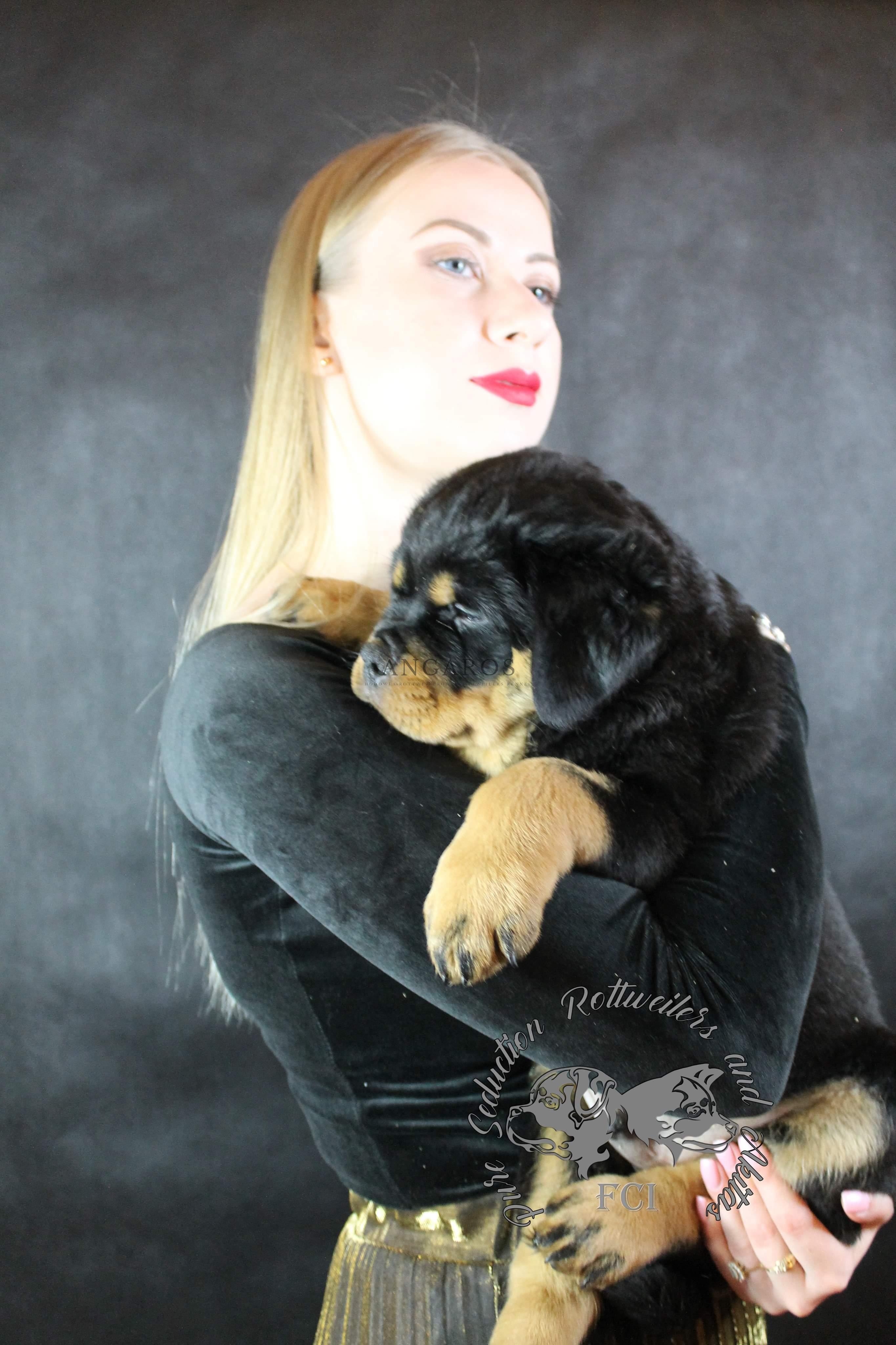 Polecamy przepięknego wyselekcjonowanego syna DIESLA Angaros. Maluch dostępny tylko dla prawdziwego miłośnika rasy! | Rottweiler - Hodowla Rottweilerów Angaros - Rottweilers - Rottweilery