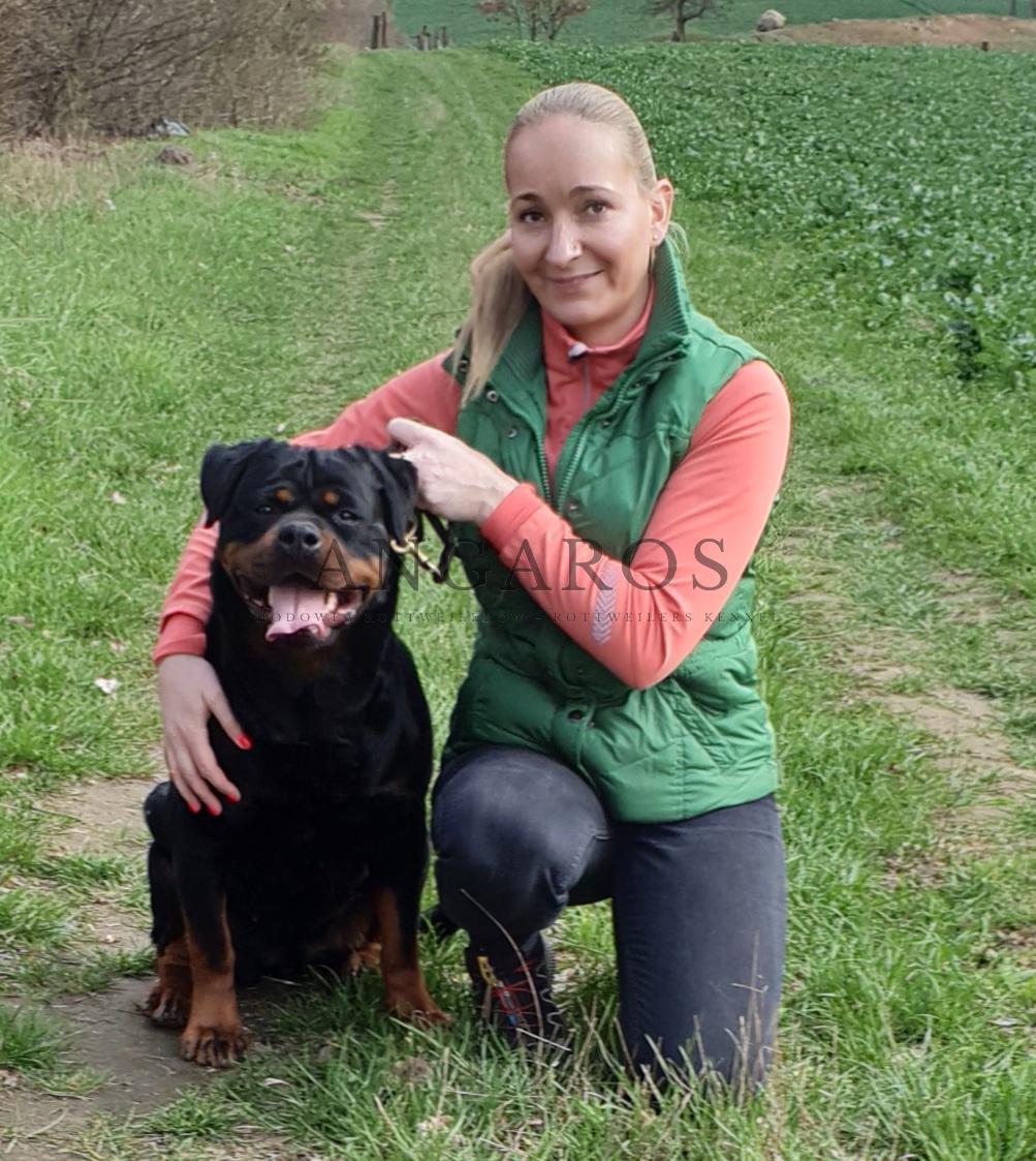 Osiem kilometrów za nami, psy przeszczęśliwe! Słonecznej i miłej niedzieli! | Rottweiler - Hodowla Rottweilerów Angaros - Rottweilers - Rottweilery