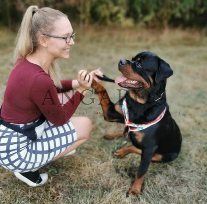 To musi być miłość! PUERTO RICO Angaros zaraz po tym jak został Zwycięzcą Młodzieży na Krajowej Wystawie Psów Rasowych w Manowie! | Rottweiler - Hodowla Rottweilerów Angaros - Rottweilers - Rottweilery