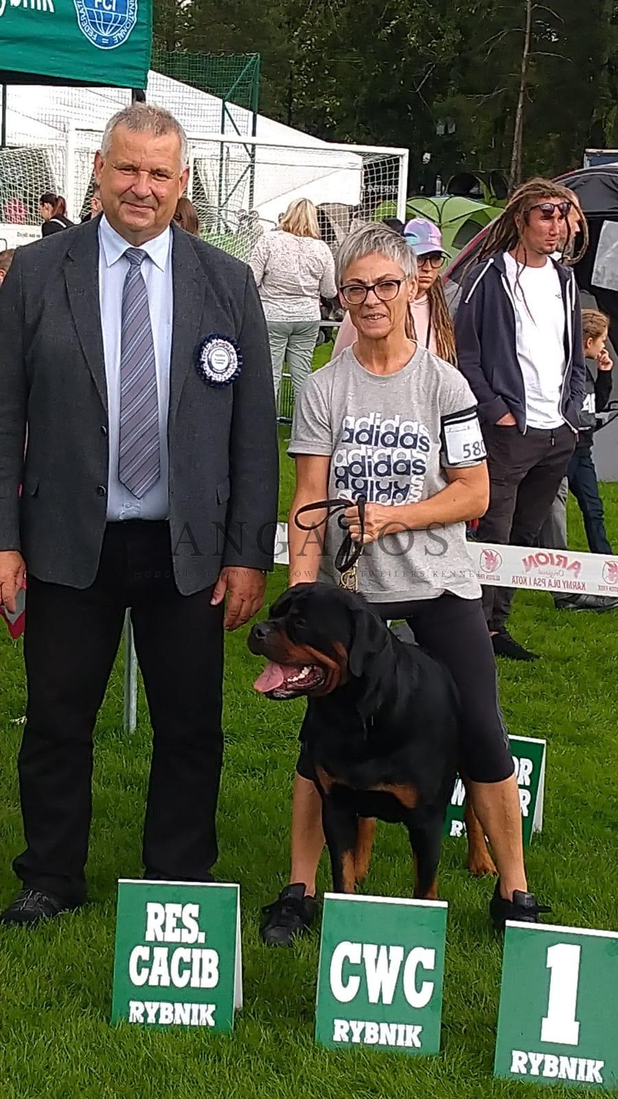 Międzynarodowa Wystawa Psów Rasowych w Rybniku 28.08.2021r., KENZO Angaros – lok.1, ocena doskonała, CWC, CACIB res! Sędziował: V. Piskay (Słowacja) | Rottweiler - Hodowla Rottweilerów Angaros - Rottweilers - Rottweilery