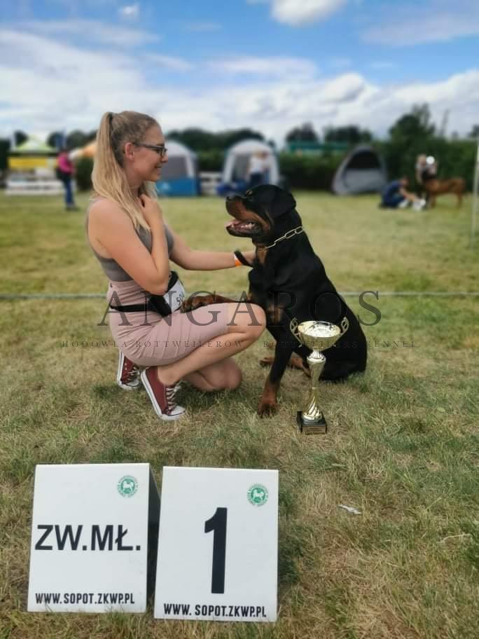 PUERTO RICO Angaros  Młodzieżowym Championem Polski ! | Rottweiler - Hodowla Rottweilerów Angaros - Rottweilers - Rottweilery