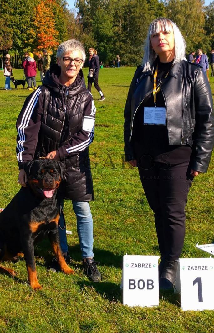 KENZO Angaros Najpiękniejszym Rottweilerem Krajowej Wystawy Psów Rasowych w Zabrzu! | Rottweiler - Hodowla Rottweilerów Angaros - Rottweilers - Rottweilery