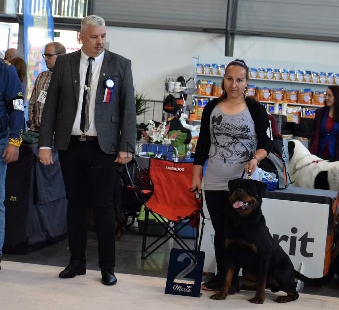 Świetny wynik PERSEUSA Angaros na Wystawie Światowej Psów Rasowych w Brnie 02.10.2021 r | Rottweiler - Hodowla Rottweilerów Angaros - Rottweilers - Rottweilery